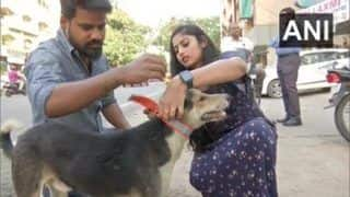 This NGO Is Helping Save Stray Animals By Putting Fluorescent Collars on Them   See Photos