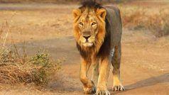 4 शेरों में पाया गया कोरोना का डेल्टा वेरिएंट, अन्य जानवरों को भी तेजी से कर सकता है संक्रमित