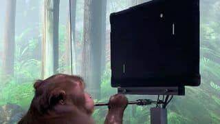 Elon Musk's Neuralink Shows How Monkey Plays Pong with his Mind   Watch