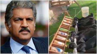Anand Mahindra Shares Adorable Video of Baby Goats Drinking Milk, Twitter Loves It   Watch