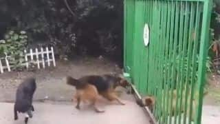 Viral Video: This Hilarious Dog Fight Will Remind You of Phir Hera Pheri Scene | Watch
