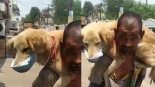 Viral Video: Homeless Man Puts His Only Mask on Dog, Says Won't Let Him Die | Watch