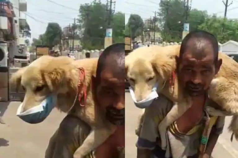 Viral Video: Homeless Man Puts His Only Mask on Dog, Says Won