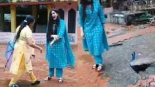 Bigg Boss Contestant Digangana Suryavanshi Attacked By Peacock, Fans Can't Stop Laughing | WATCH