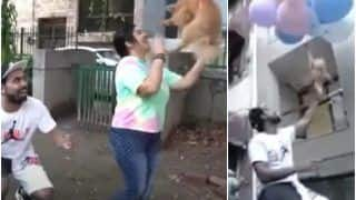 Viral Video: Delhi YouTuber Makes Pet Dog Fly Using Helium Balloons, Arrested For Animal Cruelty | Watch