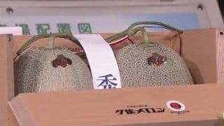 A Pair of Melons Worth Lakhs: Two Coveted Yubari Melons Sold for Almost ₹ 18 Lakhs