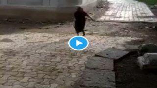 Amma Ka Desi Swag: बुजुर्ग महिला ने King Cobra Snake को पूंछ से पकड़ा, घसीटते हुए तालाब में फेंका, लोग बोले- ओ तेरी... Video Viral