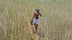 UP News: यूपी के 40 लाख से ज्यादा किसानों को योगी सरकार का 'तोहफा', बुंदेलखंड के अन्नदाताओं को सबसे अधिक लाभ
