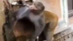 Monkey Video: पानी पीकर बंदर ने बुझाई प्यास, फिर कुछ ऐसा किया, लोग बोले- इंसानों को सबक लेने की जरूरत...