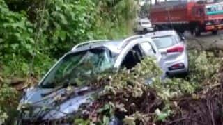 Trees Uprooted, Roads Blocked Due to Heavy Rain, Strong Winds in Shimla | WATCH