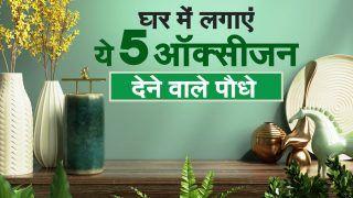 Oxygen Providing Indoor Plants: घर में लगाएं ये 5 ऑक्सीजन देने वाले पौधे