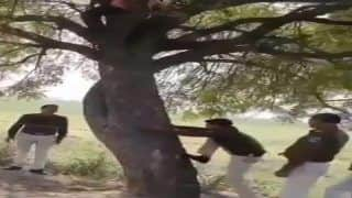 Viral Video: Thief Refuses to Come Down From Tree, Cop Climbs After Him   Watch