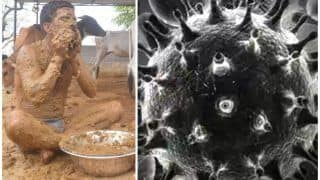 Cow Dung Increases Chances of Black Fungus in Diabetic And COVID Patients, Say Doctors