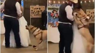 Pet Dog Dances With Couple On Their Wedding Day, Video Will Make You Go Aww | Watch