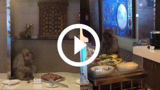 Viral Video: Monkey Eats Buffet Food At Air India Lounge of Delhi Airport | Watch