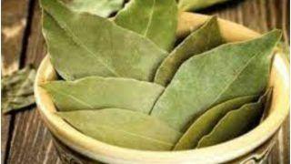 Tejpatta Chai Ke Fayde: रोजाना सुबह जरूर पीएं तेजपत्ते की चाय, फायदे जान आप भी कहेंगे 'वाह'
