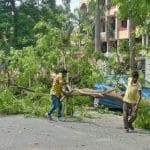 BMC Starts Felling of Over 600 Trees For Coastal Road Project in Mumbai