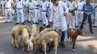 West Bengal Governor Upset Over Sheep Protest at Raj Bhavan Gate, Seeks Explanation From Police