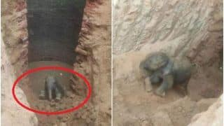 Baby Elephant Falls Into 30-Feet-Deep Well in Jharkhand, Rescue Video Goes Viral | Watch