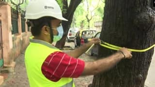 In a First, Tree Surgeons Appointed in Mumbai to Save Vulnerable Trees From Falling | See Pics
