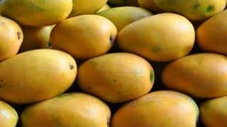 Good News For Diabetics: Pakistan Introduces Sugar-Free Mangoes at Affordable Prices