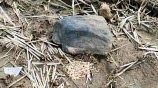 Farmer Fined Rs 21,000 For Damaging Stone Idol, Threatened With Social Boycott If He Refuses to Pay