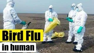 First Case of Avian Influenza in Human Reported In China. Should You be Worried?