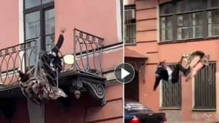 Viral Video: Couple Falls 25-Feet From Balcony While Fighting, Terrifying Moment Captured on Camera   Watch