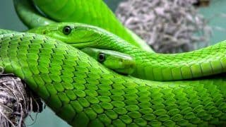 Snake Dreams Meaning: What Does it Mean if You're Dreaming About Snakes During Pregnancy