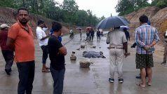 MP के उमरिया में एनएच-43 में वाहन की चपेट में आने से 7 माह के टाइगर शावक की मौत