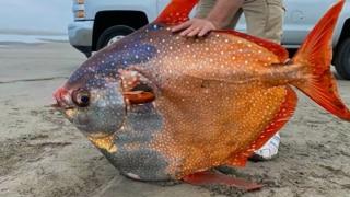 Large Fish Viral: इंद्रधनुषी रंगों वाली इतनी बड़ी मछली को देख हर कोई हैरान, इसे कहते हैं कुदरत का करिश्मा!