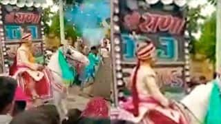 Viral Video: Wedding Horse Runs Away With Groom, Baaratis Chase Them For 4 Kms | Watch