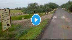 Blackbucks Video Viral: 3 हजार काले हिरणों ने की सड़क पार, PM Modi ने रि-शेयर किया वीडियो, लिखी दिल छू लेनी वाली बात