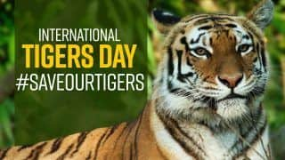 International Tiger Day 2021 : PM Modi Tweets   Everything You Need to Know About Tiger Day It's History And Significance