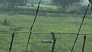 Punjab: बीएसएफ ने फिरोजपुर में दो पाकिस्तानी घुसपैठियों को मार गिराया