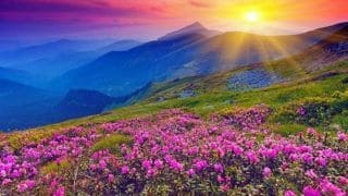 Uttarakhand Valley of Flowers Opens For Tourists: Timings, Covid Guidelines And More