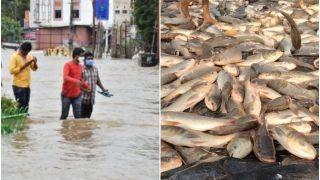 Fishing on Road: शहर की सड़कों से लोगों ने पकड़ीं 5-5 किलो की मछलियाँ, ट्रकों में भरकर भी ले गए