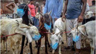 Bakri Eid 2021: बिहार में सोशल मीडिया में लग रही बकरों की मंडी, बनाए व्हाट्सएप ग्रुप
