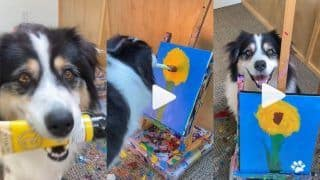 Viral Video: This Adorable Dog Painting a Flower on Canvas Will Definitely Brighten Your Day   WATCH