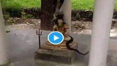 Sawan-Shiv-Nag: झमाझम बारिश, सावन में भगवान शिव पर लिपटे दिखे नाग, देख लोग बोले- जय हो बाबा भोलेनाथ | Viral Video