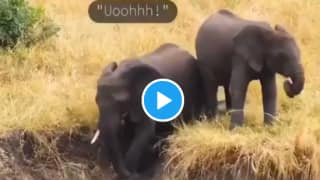 Viral Video of Baby Elephants Sliding in Mud & Playing With Their Family Will Make You Smile | Watch