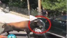 Saand Ka Gussa: सांड को आया तेज गुस्सा, सड़क पर खड़ी कार को पलटने लगा, Video Viral
