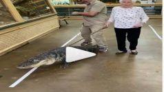 Crocodile Ke Sath Walk: आंटी ने हद कर दी! चढ़ा ऐसा फितूर, मगरमच्छ को लेकर सैर पर निकलीं, देखें Viral Video