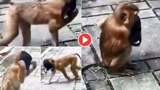 Bandar Ne Lagaya Mask: जब बंदर ने लगा लिया मास्क, फिर जो हुआ हंसी नहीं रुकेगी | Viral हो रहा मजेदार Video