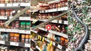 Azgar Ka Video: सुपरमार्केट की रैक में छिपा था खतरनाक अजगर, शख्स पहुंचा तो अचानक निकल आया बाहर | देखिए फिर क्या हुआ