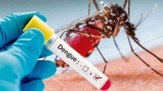 फिरोजाबाद में डेंगू और वायरल बुखार का कहर, अब तक 47 की मौत; तीन डाक्टर निलंबित