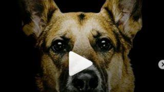 ना ये भौंकते हैं, ना ग़ुर्राते हैं… बस काटते हैं! अर्जुन कपूर की फिल्म 'कुत्ते' के पोस्टर ने मचाया तहलका