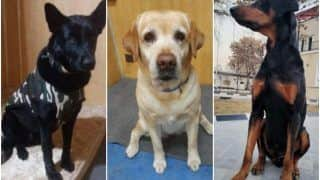 3 ITBP Dogs Who Guarded Indian Embassy in Kabul Return Home, Await New Role in Chhattisgarh