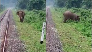 Viral Video:Train Driver Applies Brake on Time to Save Life of An Elephant Crossing Railway Tracks   Watch