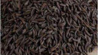 Black Jeera Benefits: कई औषधीय गुणों का खजाना होता है काला जीरा, जानें इसके 4 फायदे